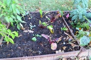 fall-planting-oct6