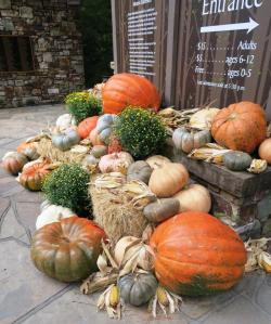 pumpkins-garvan-oct-16-2