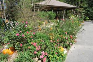 south-arkansas-arboretum-oct-16-4