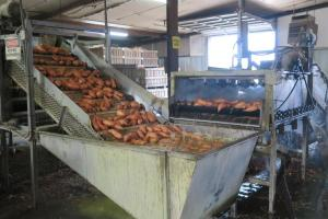 sweet-potatoes-ms-oct-4