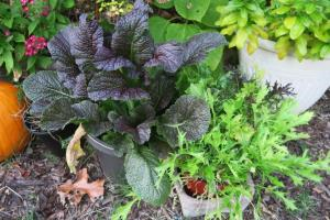 vegetables-oct30-16-2