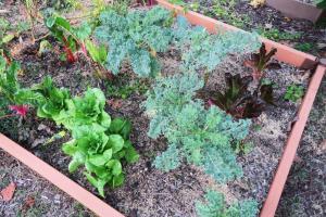 vegetables-oct30-16-3