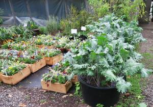 cool-season-veg-in-containers-nov-16-3