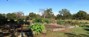 st-joseph-urnip-bee-thankful-a-garden-celebration-4