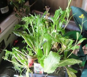 vegetables-dec18-16-5