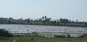 cambodian-countryside2