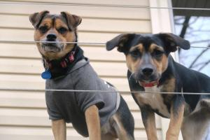 dogs-jan21-17