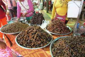 fried-insects-cambodia5