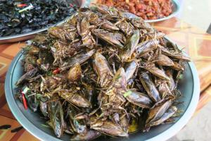 fried-insects-cambodia6