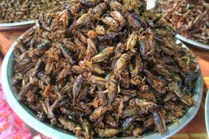 fried-insects-cambodia8