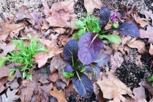 veg-winter-jan10-3