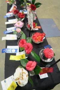camellia-afgs-sat-17-21