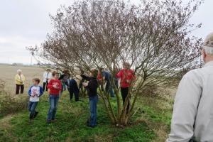 crape-myrtle-pruning-dewitt-15