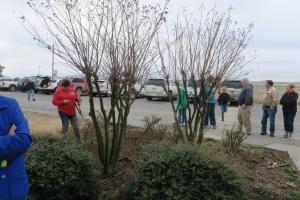 crape-myrtle-pruning-dewitt-2
