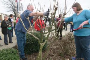 crape-myrtle-pruning-dewitt-8