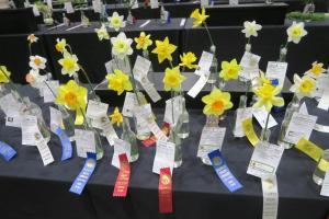 daffodils-afgs-sat-17-18