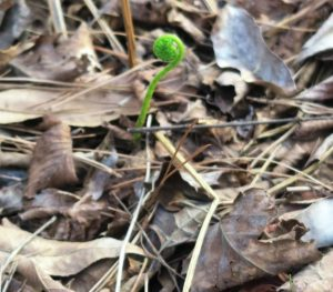 fern-emerging-feb8-17