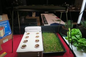hydroponics-afgs-sat-17-20
