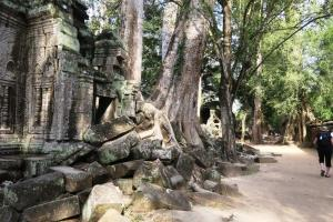ta-prohm-temple0119