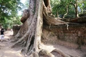 ta-prohm-temple0121