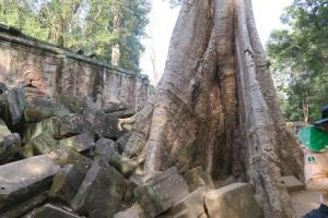 ta-prohm-temple0130