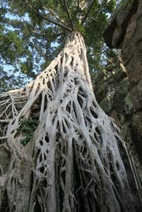 ta-prohm-temple0169