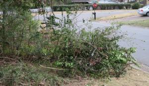 pruning-mar-17-1