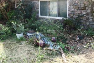 pruning-mar-17-3