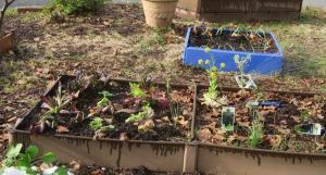 veg-garden-mar4-17-2