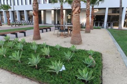 agave.cal.jcapr.12 (56)1