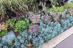 succulents los angeles.jcapr.12 (69)1