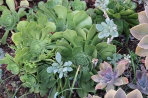 succulents los angeles.jcapr.12 (69)3