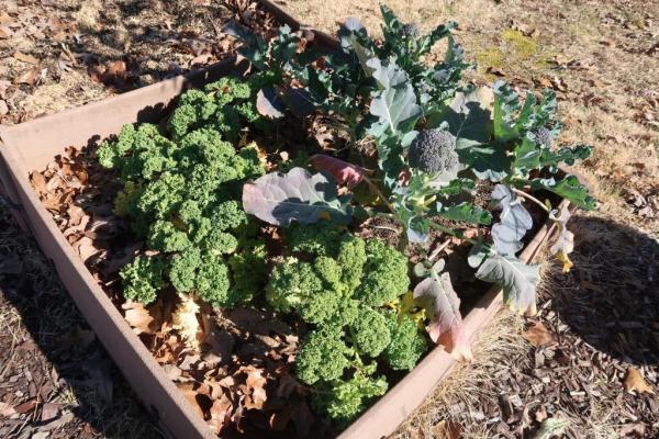 kale and broccoli.jan19