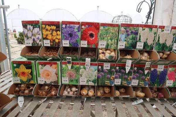 spring bulbs (2)