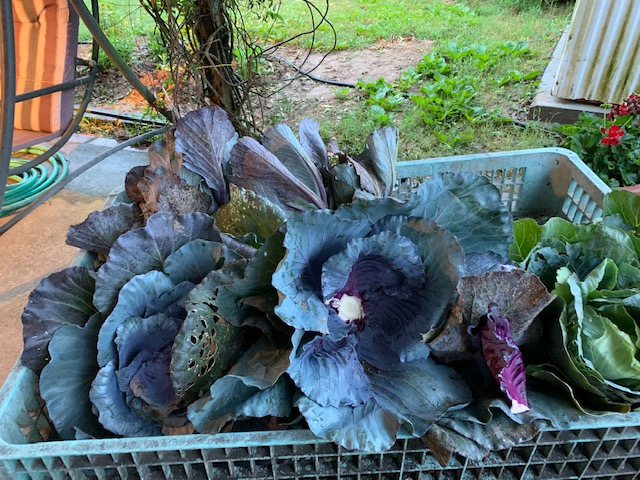 In the Garden with Arkansas Extension Horticulture   Welcome